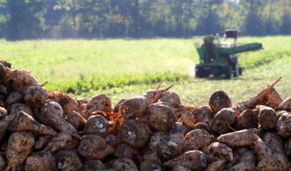 Récolte de la betterave sucrière